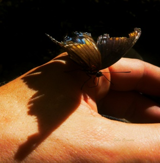 Butterfly on my hand with wing shadow on OHT