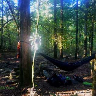 The morning sun spotlights my trail mascot and camp flag, Spalding the friendly face-hugger, at Herrod's Creek along the Ozark Highlands Trail (OHT).