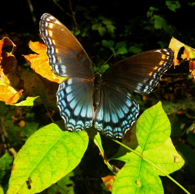 Butterfly on bright green leaves on OHT