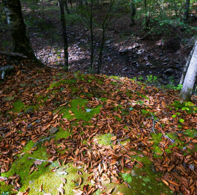 Moss green path to river gorge on OHT