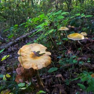 Mushroom umbrellas on OHT