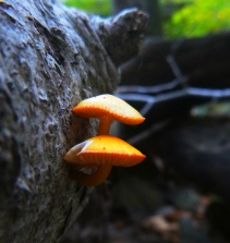 mushrooms reach for the light on OHT