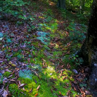 Neon Green Pathway of Moss on OHT