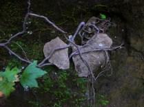 broken heart in vines on OHT