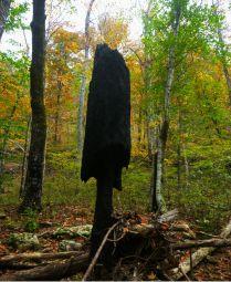 Burned tree looks like mushroom cap on OHT
