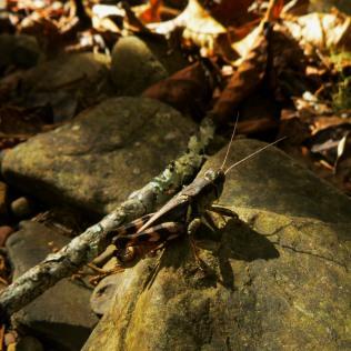grasshopper on rock in fall on OHT
