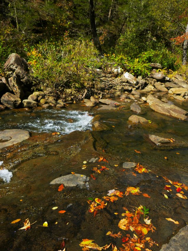 Hurricane creek with fall leaves on OHT