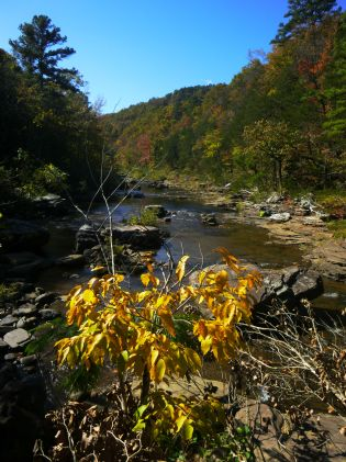 Hurricane Creek Yellow leaves on OHT