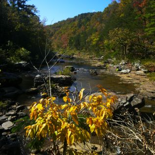Hurricane Creek Yellow leaves on OHT