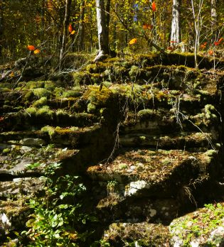 Mossy steps on the OHT