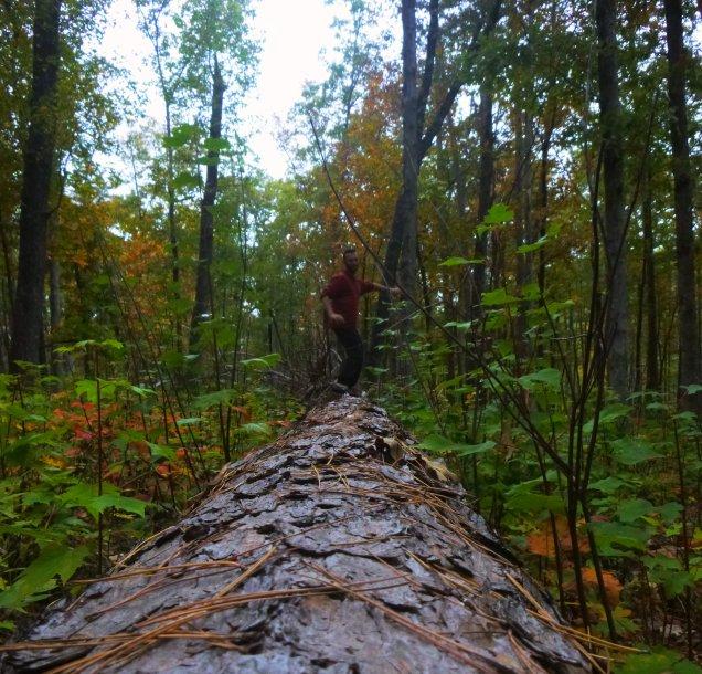 Ozmore dance on fallen pine on OHT