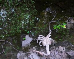 Spalding explores vines on the OHT