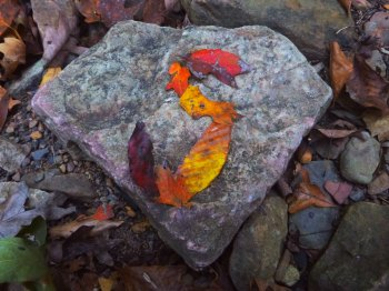 Superman emblem in nature with fall leaves on OHT