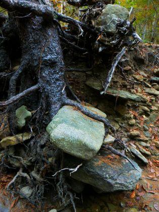 Tree holds onto rock like a book on OHT