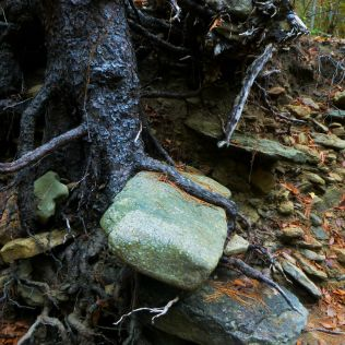 Tree holds onto rock like a book on OHT