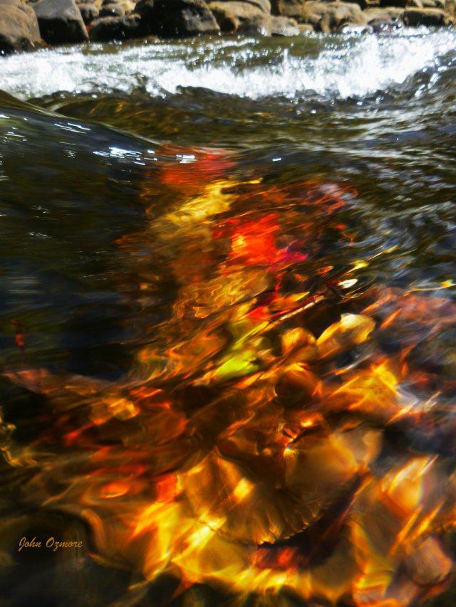 Vibrant leaf trap on Hurricane Creek waterflow OHT