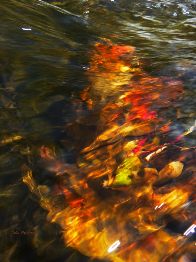 Vivid colors in the leaves with waterflow on OHT
