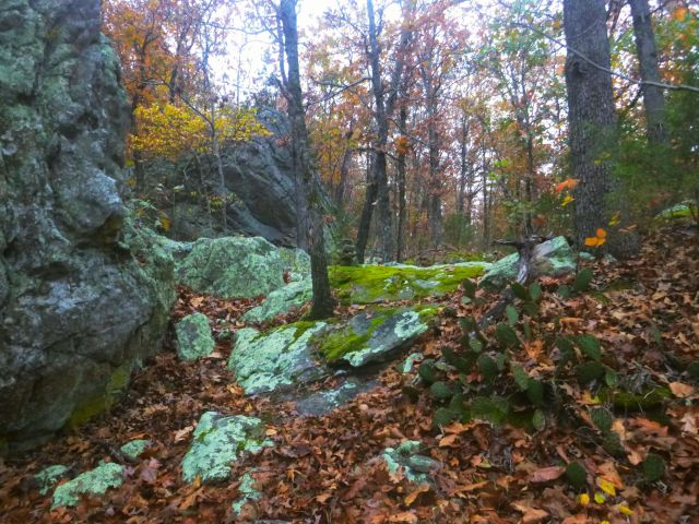 Blue green lichen boulders and cactii path on OHT