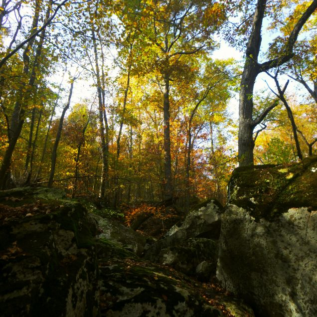 Boulders of moss and golden leaves on OHT