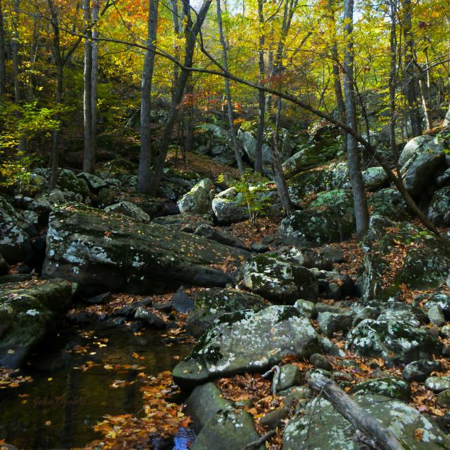 Creek in fall yellow and gold on OHT