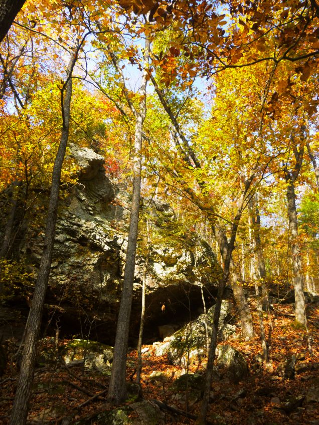 fall yellow over hanging bluff and dead leaves on OHT