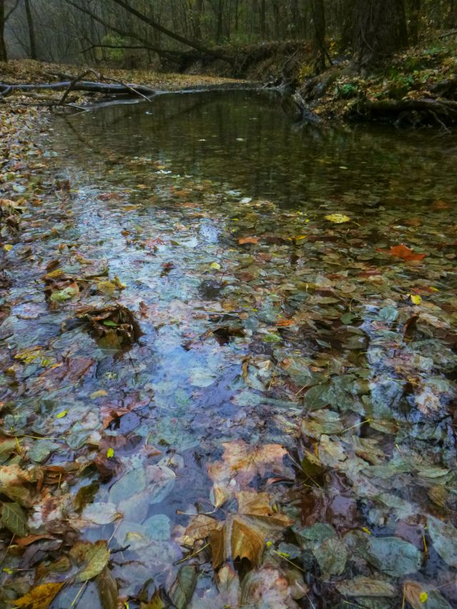 Fallen leaf collection in creek on Buffalo trail