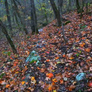 Fallen leaves on Path in rain