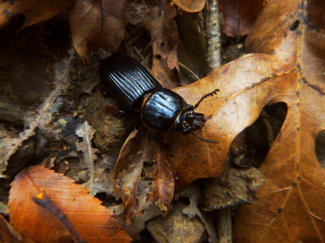 Giant beetle on OHT