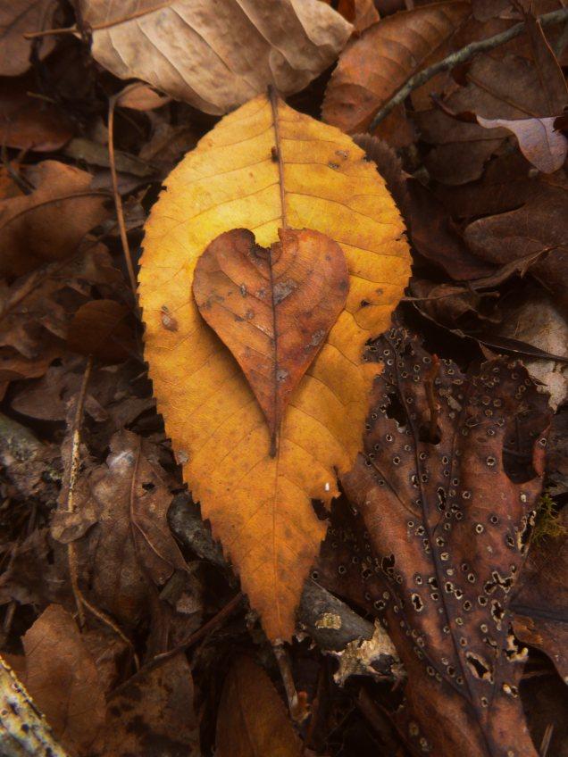 Heart on fall leaves on OHT