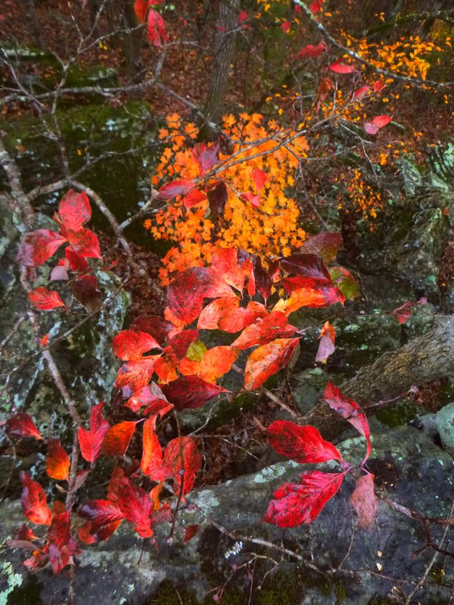 Red and orange leaves glow over bluffs on Buffalo Trail
