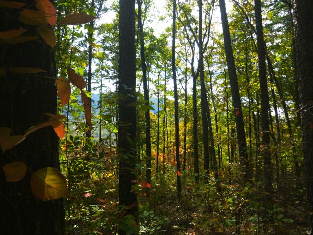 through the trees as fall approaches on OHT