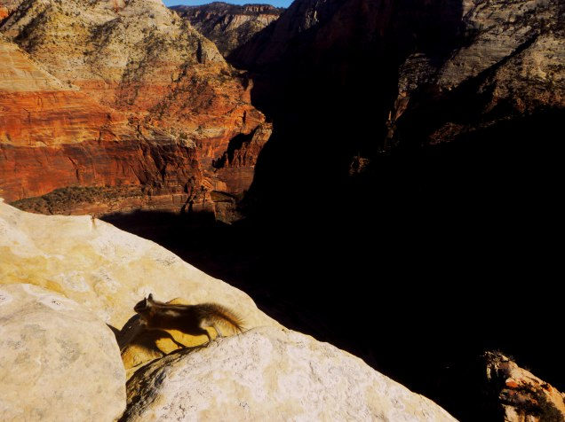 Angels Landing Chipmunk Bounds across the stone