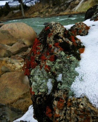 Colorful Algae at yellowstone River