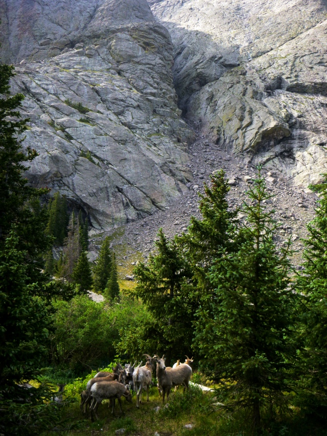 Goats under the Mountain.jpg