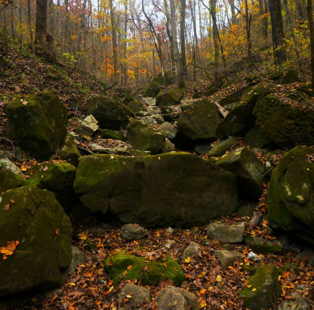 Moss stone steps and fall leaves