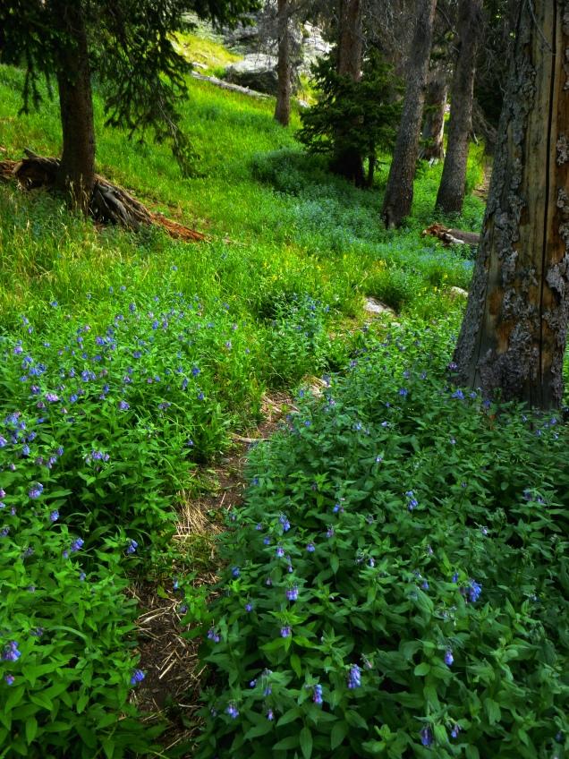 Willow Lake Path
