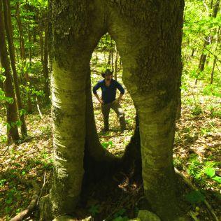 David in Portal Tree